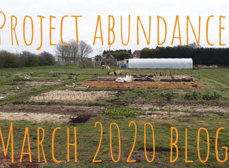 The Month Of March At Project Abundance