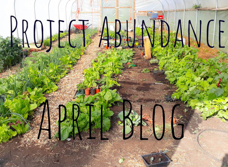 The Month Of April At Project Abundance