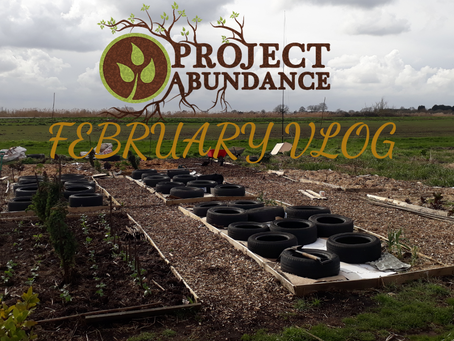 FEBRUARY VLOG (Seed Germination, Pests & More)