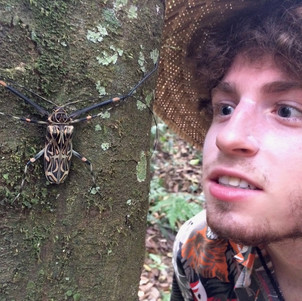 That harlequin beetle is as big as my face!