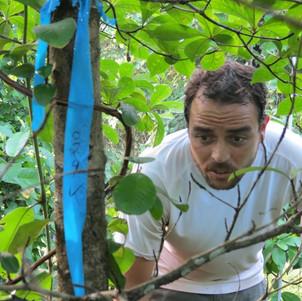 Summit experiment plant census