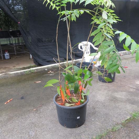 Greenhouse experiment
