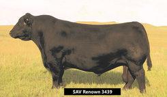 SAV Renown 3439