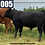 Thumbnail: Exposed Young Cows