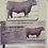 Thumbnail: Bred Heifers
