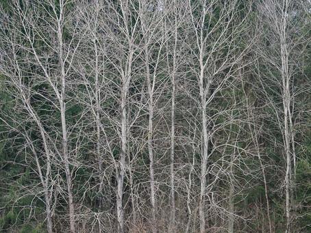 Skogsbygd