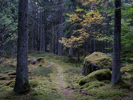 Loberget - Mieån