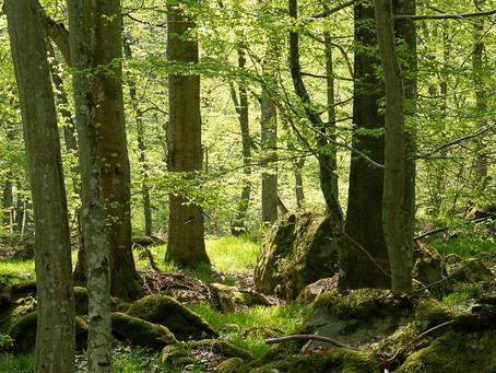 Blekingekust och kustskog. Elleholms naturreservat.