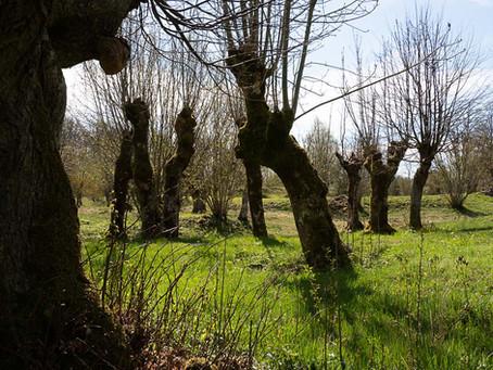 Ire naturreservat och naturskola