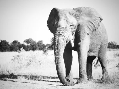 Zeltabenteuer Botswana-Simbabwe 31.10. - 09.11.2021