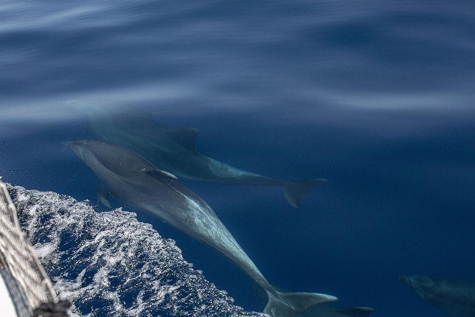 dauphinsbleusfond.jpg