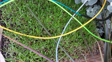 EL Wire and WOW grass