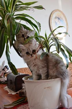 Gattini.jpg
