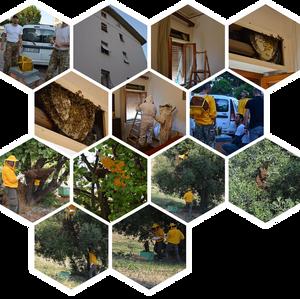La produzione artigianale del miele