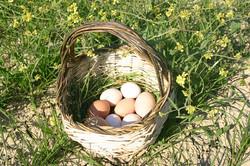 Le nostre uova