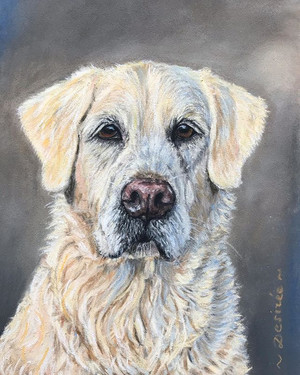 Joris (x Labrador-Golder Retriever, 14 jaar.