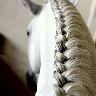 Spanish horse mane