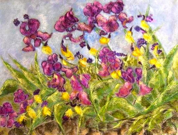 Iris of May 2