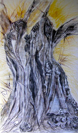Trunk of Olive Tree 6