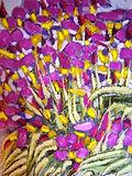 Iris of May
