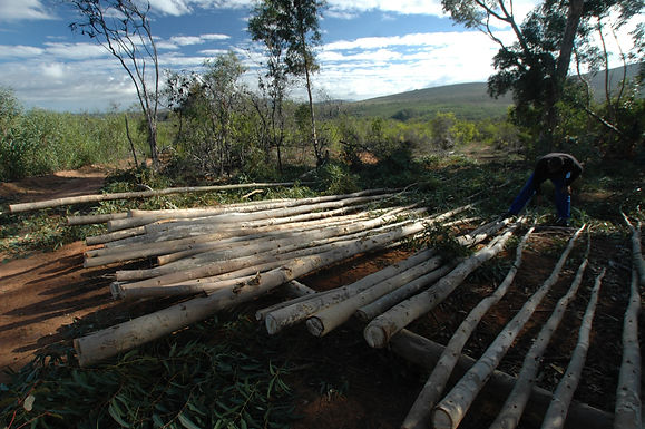 Lunar wood and Moon phase harvesting of timber