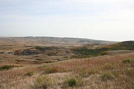 Wintering Alberta Native Prairie Grasses - Katheryn Taylor