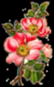 wildflower-image-field-rose-botanical-ar