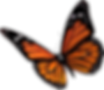 butterfly-clipart-transparent-13.png
