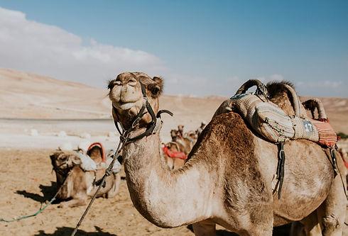 Israeli Deserts - Part 2: The Negev Desert