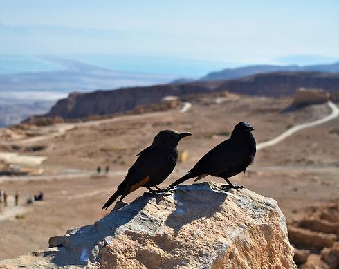 Crows in the Judean Desert (Giving Getaway)