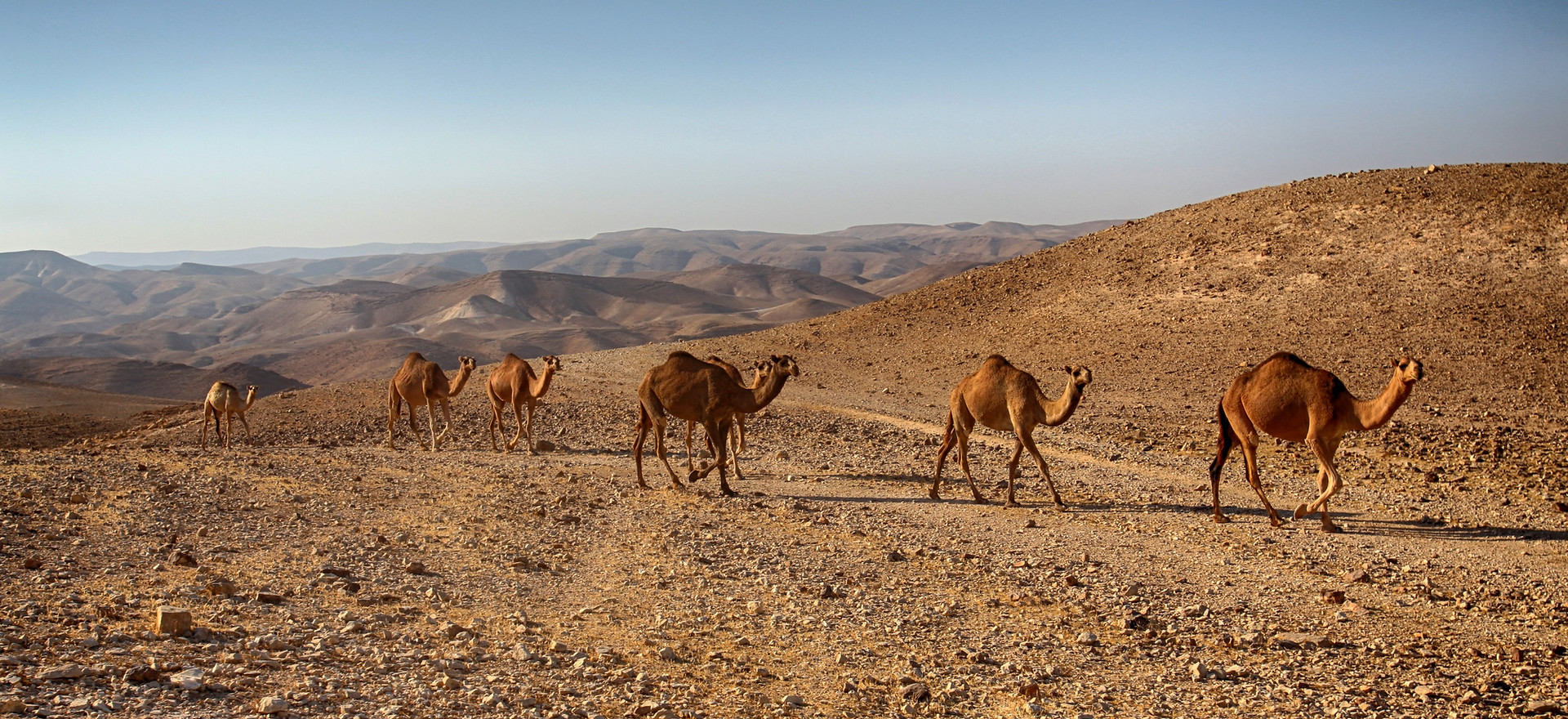 Israeli Deserts - Part 2: The Endlessness of the Negev Desert