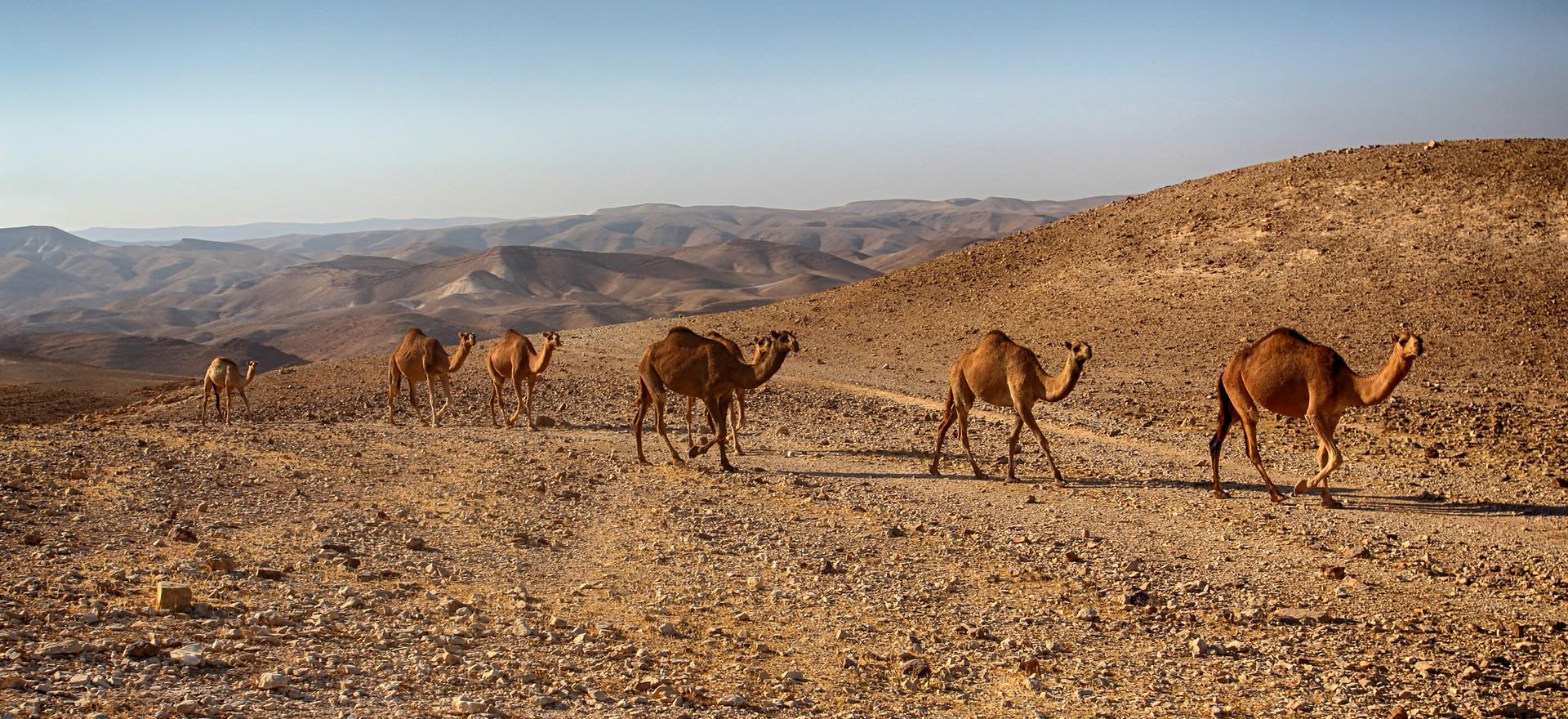 Israeli Deserts - Part 2: The Endlessness of the Negev Desert