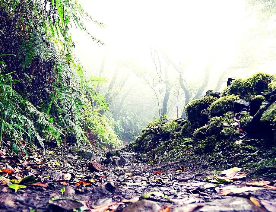 North Tenerife - Part 2: The Volcanic Kingdom