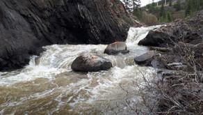 Alberta's Eastern Slopes Streams, an Endangered Habitat? Part 1: Habitat Fragmentation