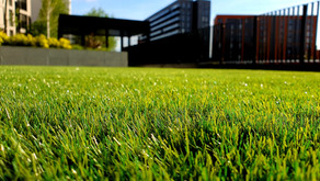 Are Our Lawns Hurting Us and the Environment?