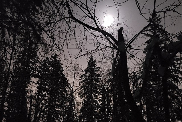 Full moon from dark forest