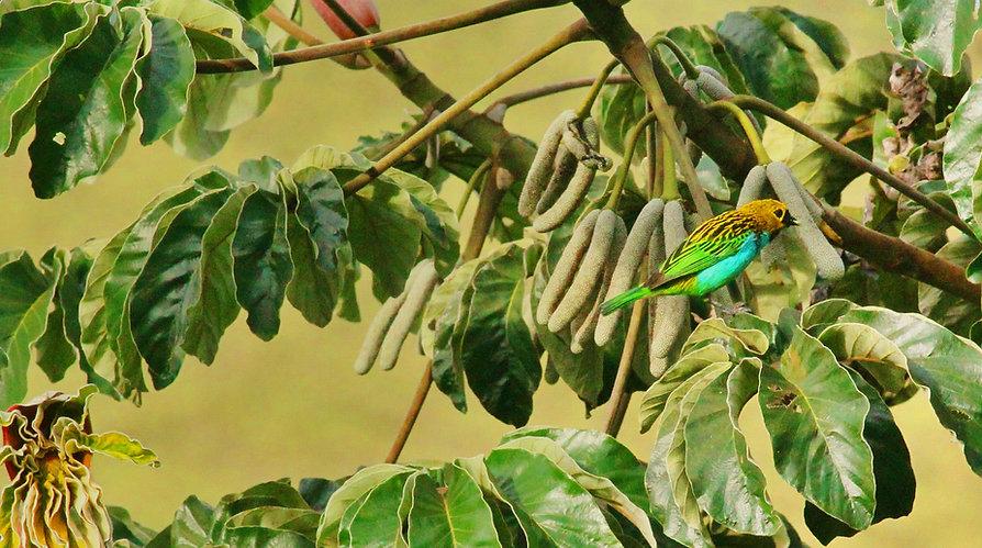 PássaroPromutuca Sustentabilidade Preservação Ambiental Vale do Mutuca Minas Gerais Brasil