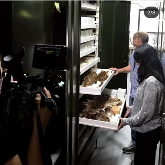 Concer ajuda Museu Nacional a reconstituir acervo