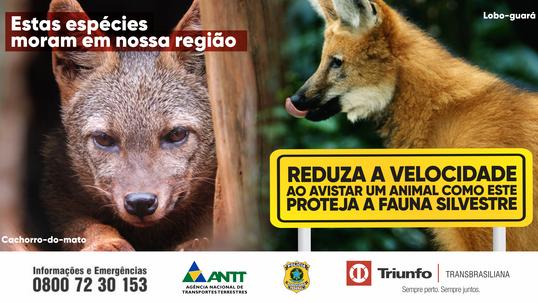 Triunfo Transbrasiliana lança campanha de preservação da fauna silvestre