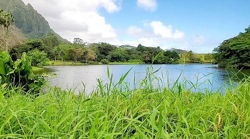 Kaneohe Neighborhood Ho`omaluhia Botanic