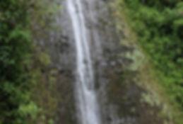 manoa falls.jpg