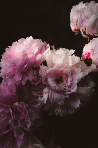 Peonies Photography, styling & editing: Rosie Beare