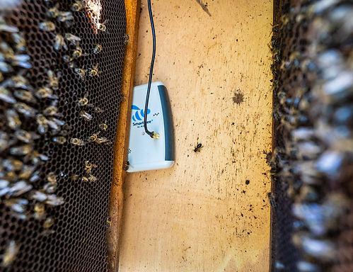 SmartBee inside the hive .jpg