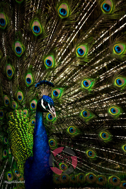 Feathers of Green