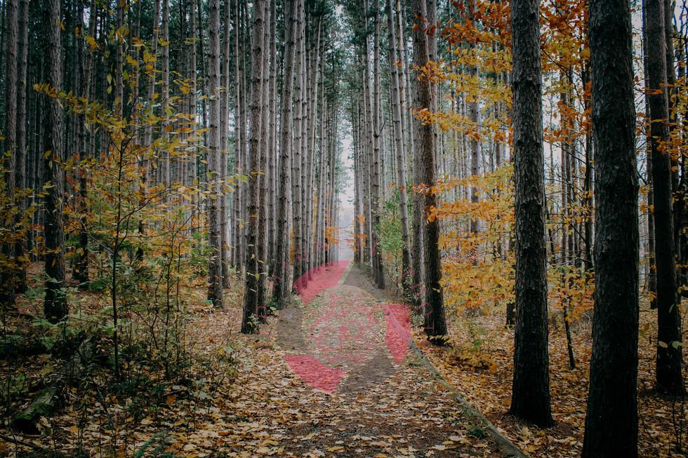 Follow the Path display