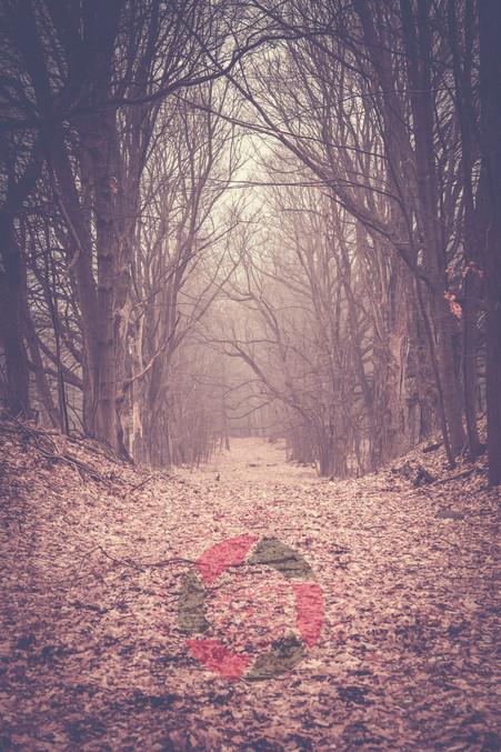 Foggy Winter Path