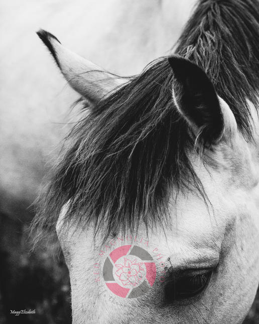 Horse Parts 4