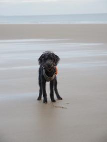 Alwyn - Monkstone Point Beach
