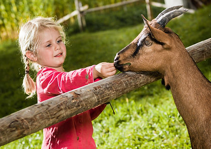Outdoor museum of houses and Swiss traditions with farm animals, cows, goats for families