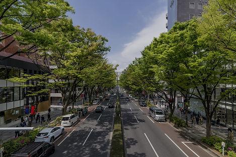 Poda de arvoresárea urbana